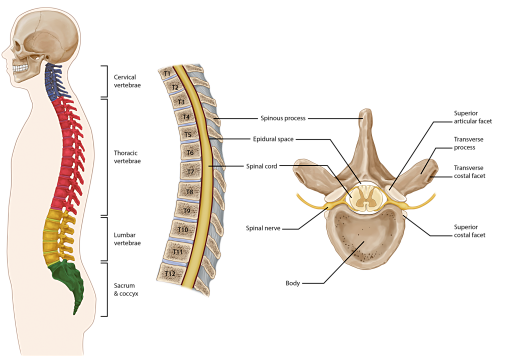 Thoracic Back Pain Pain Spa