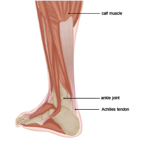 Achilles tendon lab