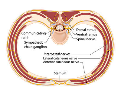 intercostal nerve opt 1