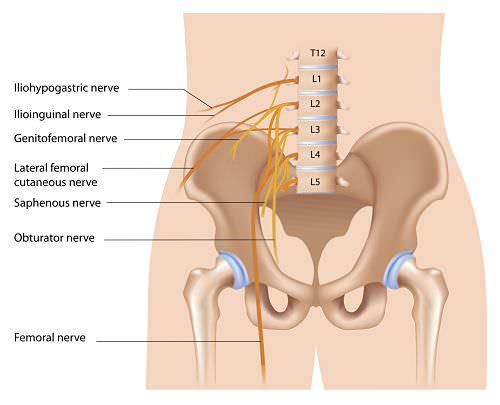 inguinal nerve opt 1